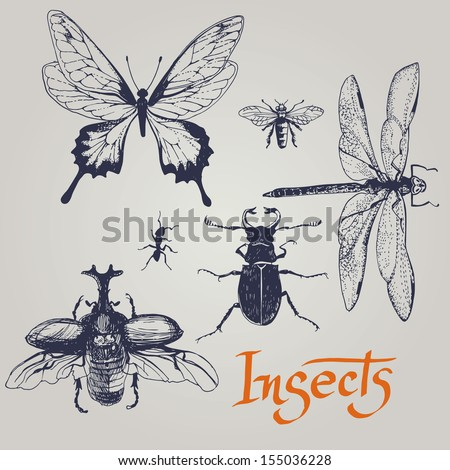 Set of various insects. Vector. - stock vector