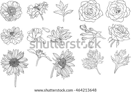 set of various isolated flower coloring page