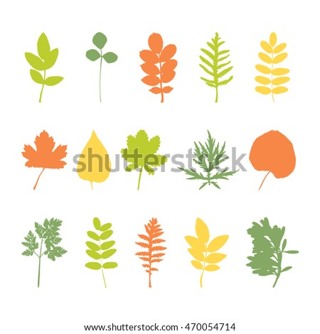 Set of various leaves design elements. Vector illustration.