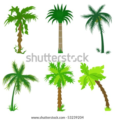 Set of various palm trees. Objects isolated. Vector tropical collection for Your design - stock vector