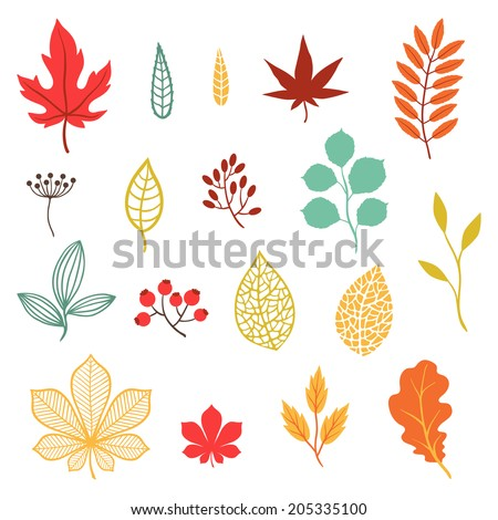 Set of various stylized autumn leaves and elements. - stock vector