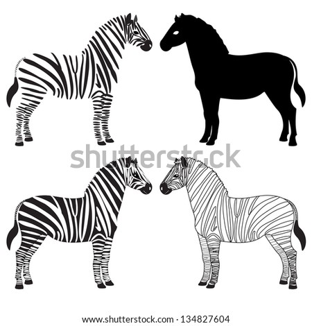 Set of various zebra silhouettes - stock vector