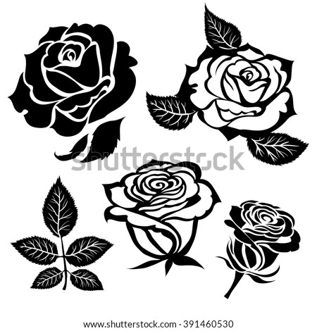 Set of vector black rose flower design elements