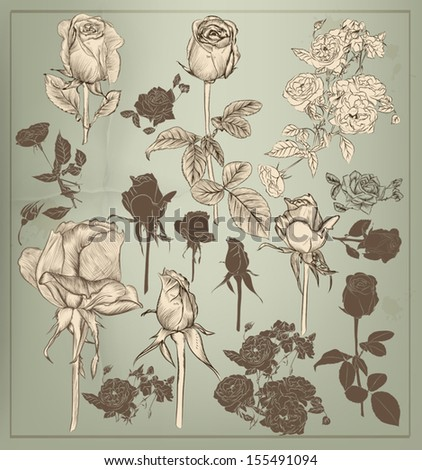 Set of vector detailed hand drawn roses. Floral vintage vector - stock vector