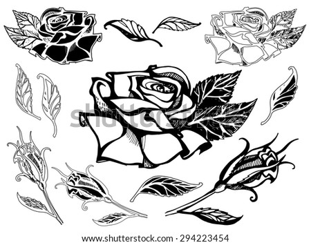 Set of vector floral design elements, freehand drawing - flowers and leafs
