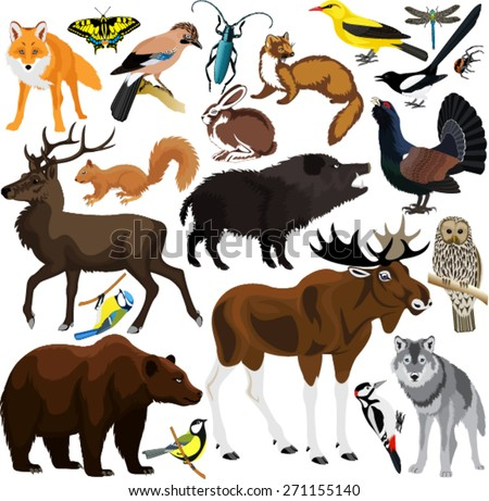 set of vector forest animals - stock vector