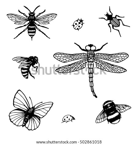 Set of vector hand drawn Insects. Insect Collection of  Bee, Dragonfly, Ladybug, Bug, Wasp, Butterfly. Isolated on white background.