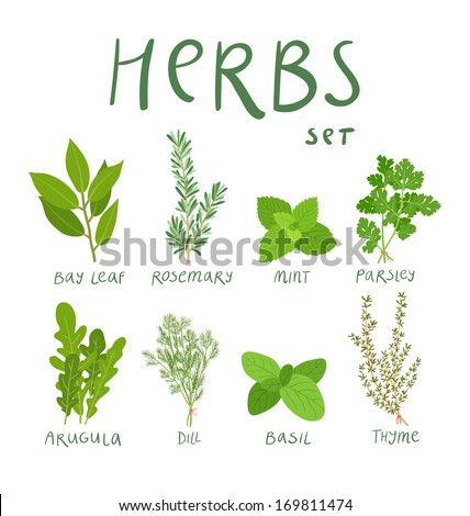Herb Stock Photos Royalty Free Images amp Vectors Shutterstock