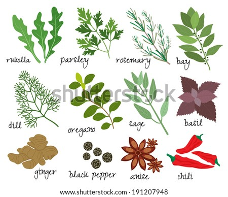 Set of vector illustrations of herbs and spices with sprigs of fresh rosemary  rocket  parsley  bay leaves  dill  oregano  sage  basil  root ginger  black peppercorns  anise and red hot chillies - stock vector