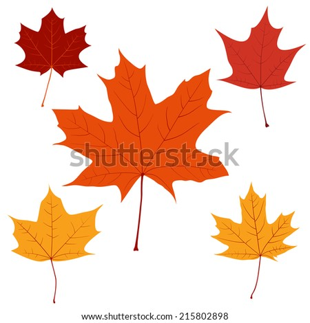 Set of vector maple leaves for your design - stock vector