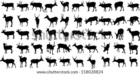 Set of 50 vector silhouettes of deers