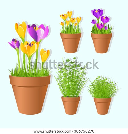 Set of vector spring garden flowers in tots. Crocus flowers and green grass  in pots,printable files. Vector printable boxes,half boxes, in flat colors for garden party decor.