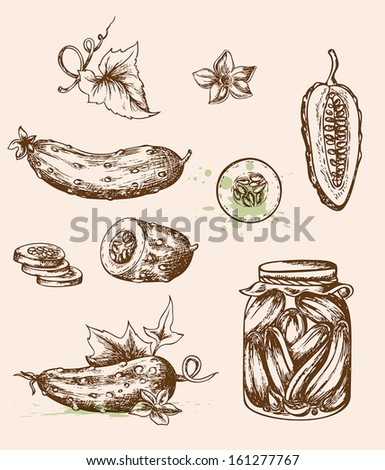 Set of vector vintage hand drawn cucumbers. Vegetable icons in retro style