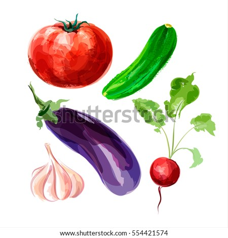 Set of vector watercolor vegetables. Tomato, cucumber, eggplant, garlic, radish