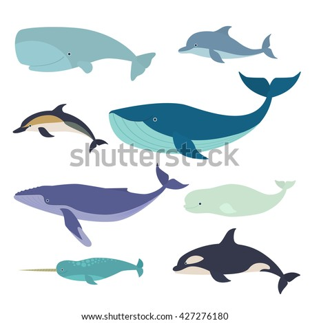 Set of vector whales and dolphins. Vector illustration of marine mammals, such as narwhal, blue whale, dolphin, beluga whale, humpback whale and the sperm whale. - stock vector