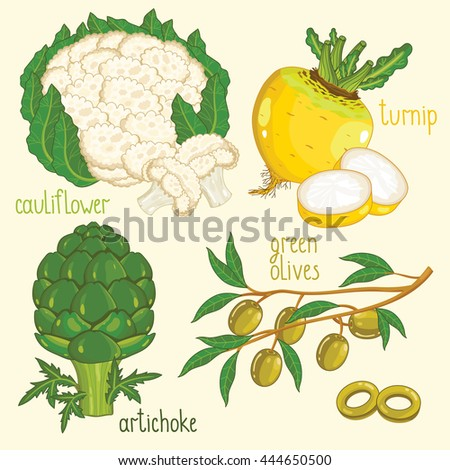 Set of vegetables mix vector isolated. Healthy eat. Cauliflower, turnip, green olives and artichoke vegetables. Natural organic food. Ingredients for a vegetarian meal. - stock vector