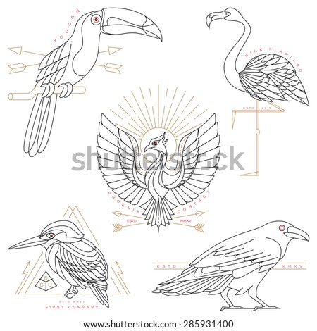 Set of vintage thin line bird labels & badges. Retro vector design graphic element, emblem, logo, insignia, sign, identity, logotype, poster. Stroke line objects with typographic for t-shirt prints. - stock vector