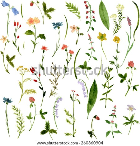 Set of watercolor drawing herbs and flowers, vector illustration - stock vector
