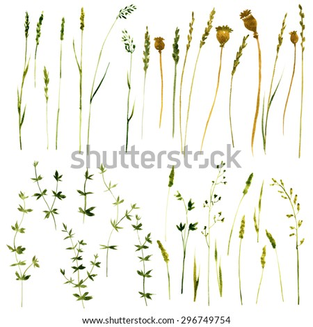 Set of watercolor drawing wild flowers, herbs and twigs, painted  field plants, isolated color  floral elements, hand drawn vector illustration - stock vector