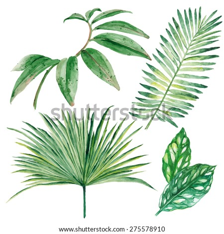 Set of watercolor tropical leaves isolated on white background. Vector illustration - stock vector