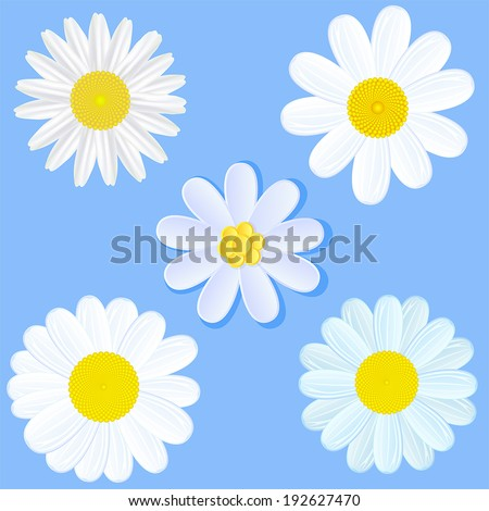 Set of white daisies on blue background, illustration. - stock vector