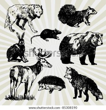 Set of Wild Animals Hand Drawn - stock vector
