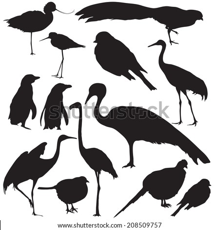 Set of wild birds silhouettes. Vector.