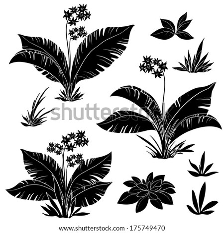 Set plants: flowers and grass, black contours isolated on white background. Vector - stock vector