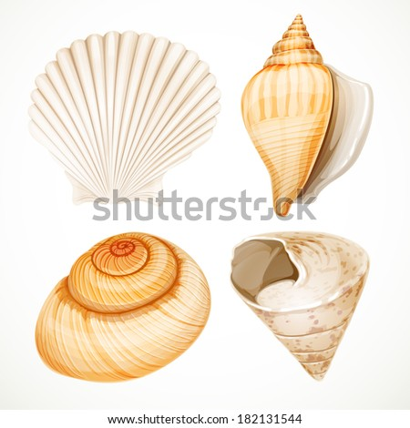 Set realistic seashells isolated on white background - stock vector