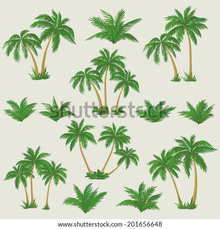 Set tropical palm trees with green leaves, mature and young plants. Vector