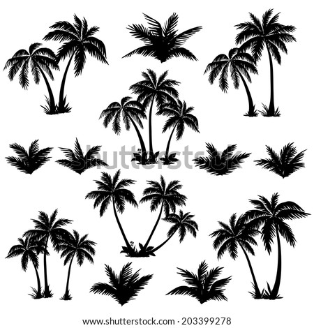 Set tropical palm trees with leaves, mature and young plants, black silhouettes isolated on white background. Vector - stock vector