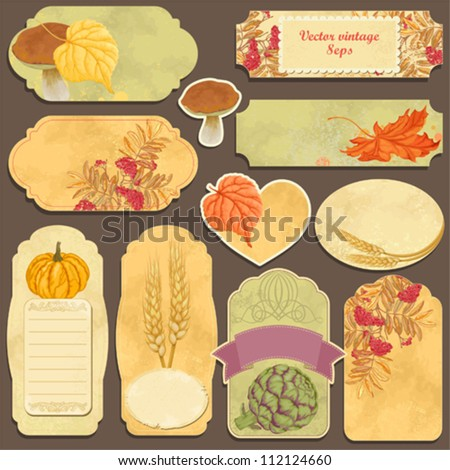 Set vector cards with vegetables, ash, autumn leaves and wheat ears - stock vector