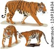 Set vector images of tigers - stock vector