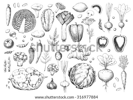 Set vegetables and herbs. Healthy vegetarian food. Vintage black and whitel illustration in the style of engravings. Harvest. Hand drawn food vector background.