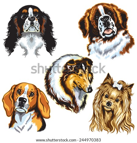 set with dogs heads, difference breeds, images isolated on white