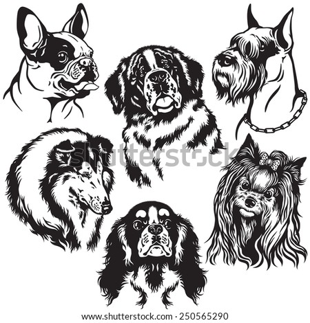 set with dogs heads of difference breeds , black and white images  - stock vector