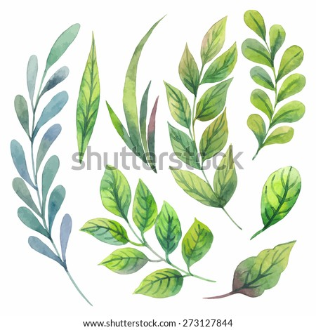 Set with floral elements and leaves. Watercolor. - stock vector