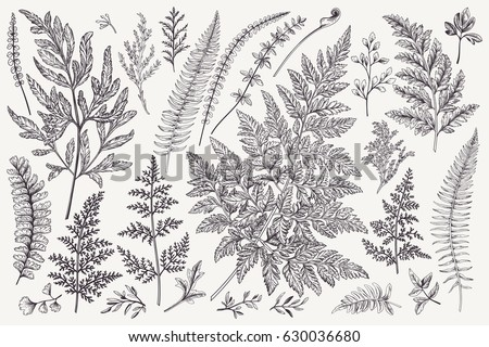 Set with leaves. Ferns.  Vector design elements. Black and white. Botanical illustration.