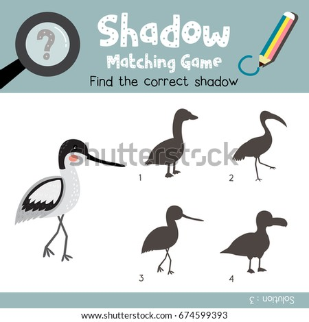 Avocet Stock Images Royalty Free Images Vectors Shutterstock