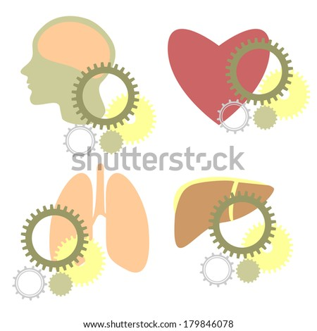 Shapes of stylized human heart, lungs, liver and head combined with various gears - stock vector