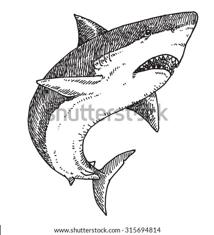 Shark vector illustration.