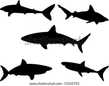 sharks collection vector - stock vector