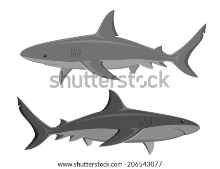 Sharks. Set of two great white sharks isolated on white background. Vector sharks.