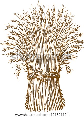 sheaf of wheat - stock vector