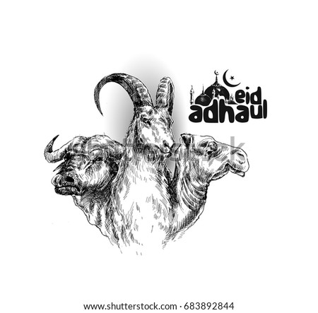 Sheep buffalo camel Poster Calligraphy of text of Eid Al Adha, Hand Drawn Sketch Vector illustration.