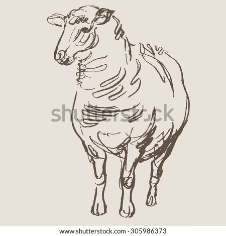 sheep hand draw sketch vector
