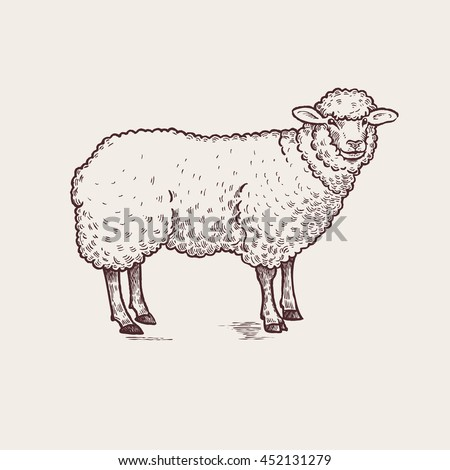 sheep series of farm animals graphics hand drawing sketch vintage engraving