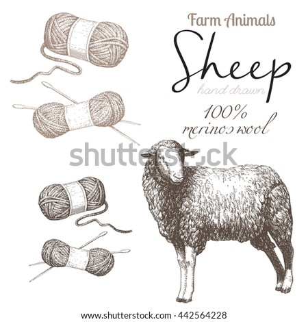 Sheep 1. Sheep breeding. Set of vector sketches on a white background. Merino sheep. Merino wool. Wool skeins - stock vector