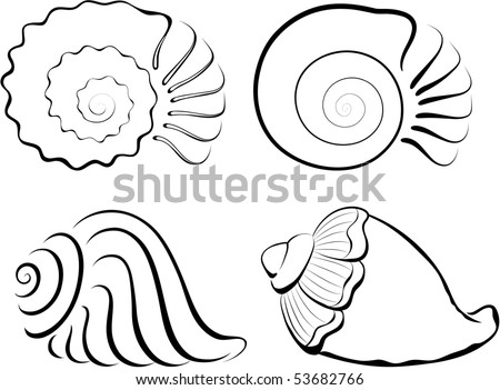 Shells - stock vector