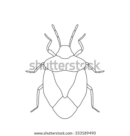 stink bug coloring page - european stink bug stock images royalty free images
